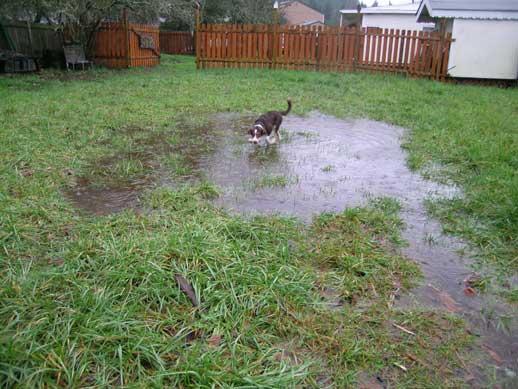 How high 39 s the water zuma for Backyard pond depth